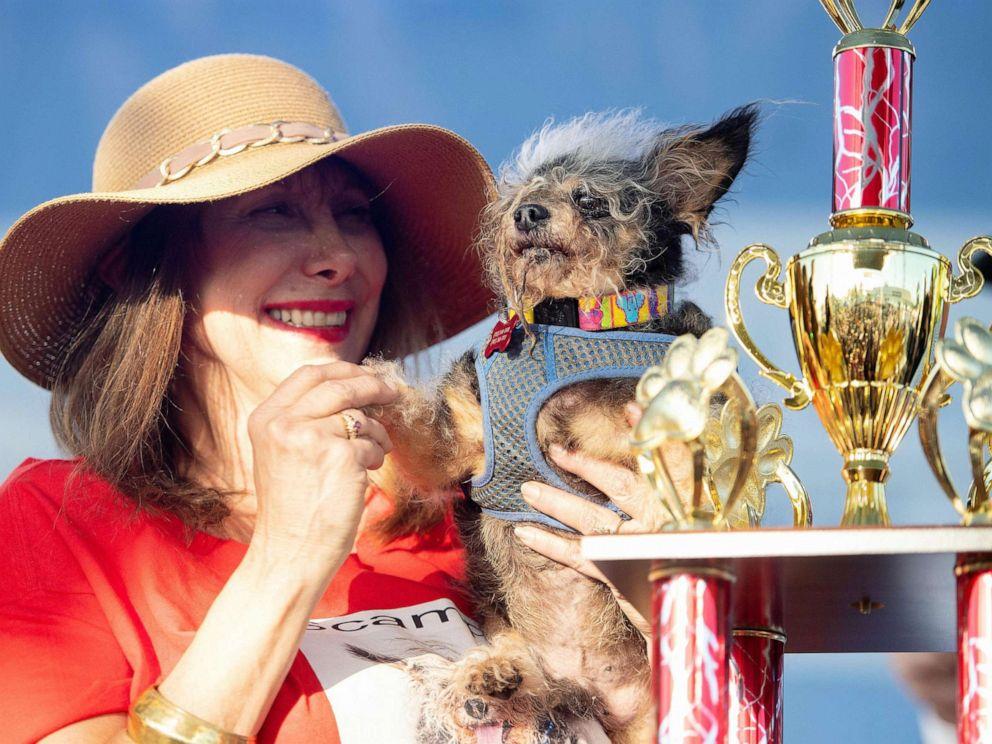 Негодяй-бродяга признан самой уродливой собакой в мире