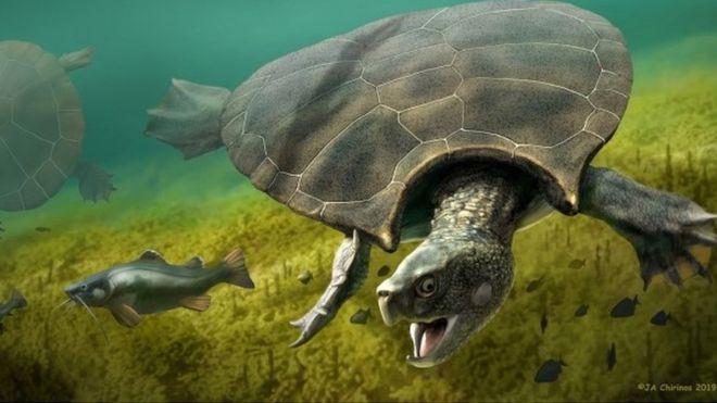Рогатые черепахи размером с авто. Ученые нашли окаменелости крупнейшего...