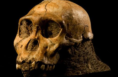 В Китае нашли кости неизвестного науке  доисторического человека