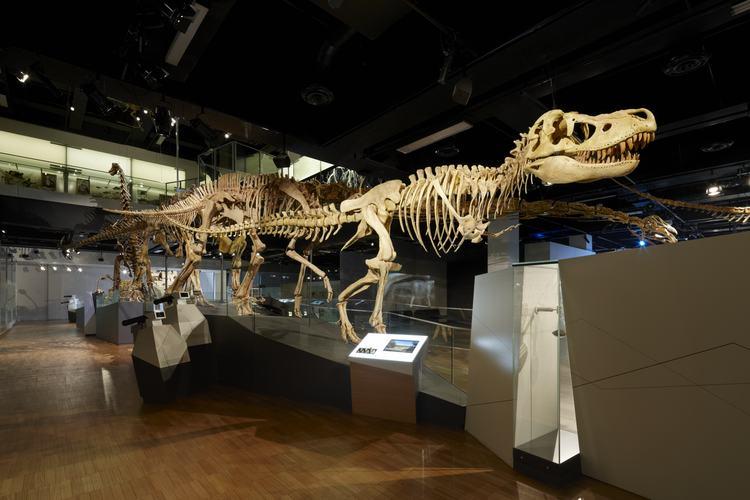 Жил 110 миллионов лет назад: австралийские ученые нашли коготь огромного...
