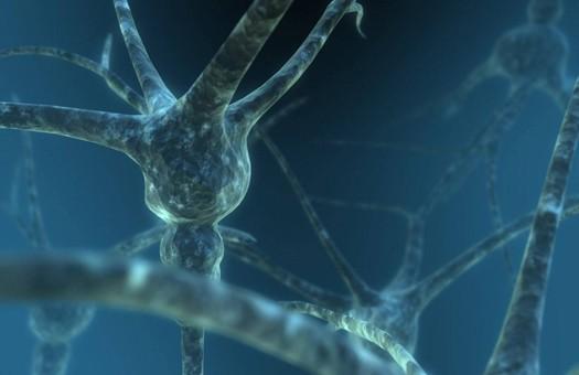 Ученые обнаружили протеины, помогающие восстанавливать нервные клетки