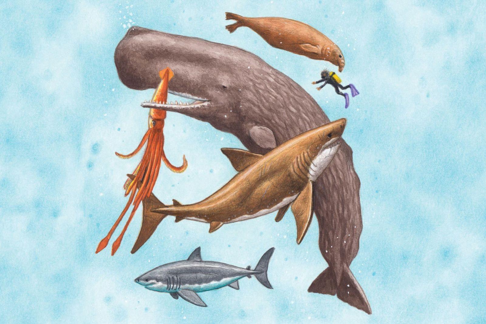 рыба, кит, морские существа