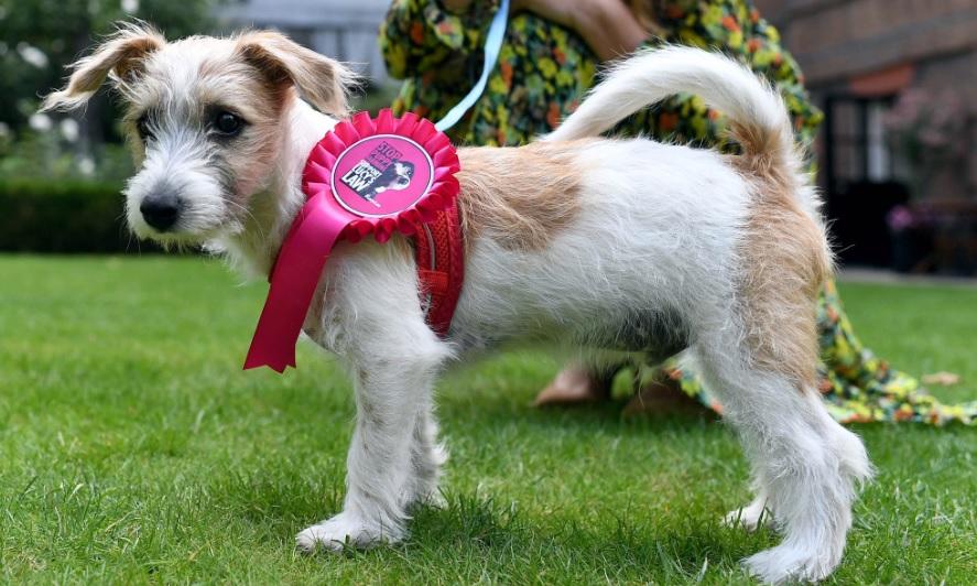 Премьер-министр Великобритании завел себе собачку