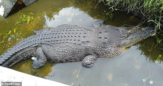 Крокодил съел ученого, который пришел его покормить