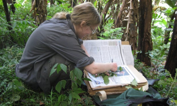 Ученые насчитали пугающее число растений, исчезнувших с лица Земли