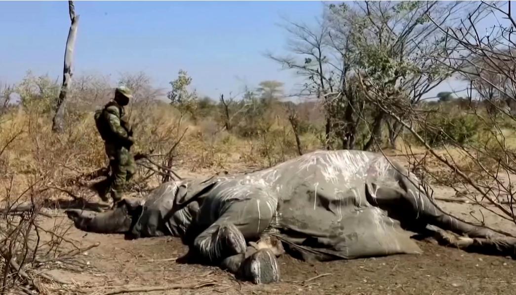 Стало известно, из-за чего в Ботсване погибли 330 слонов