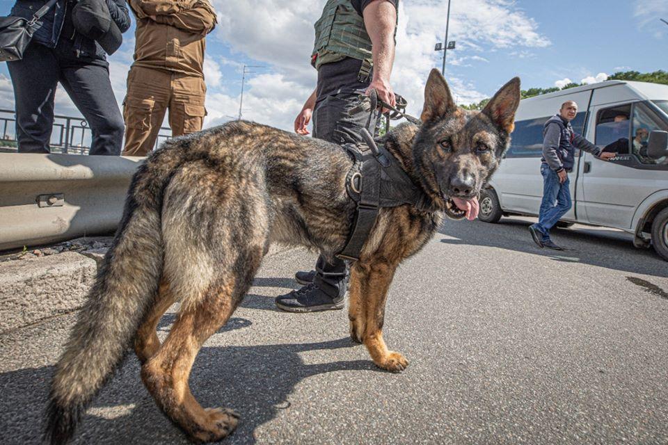 """""""Минера"""" на мосту Метро помогла задержать служебная собака"""