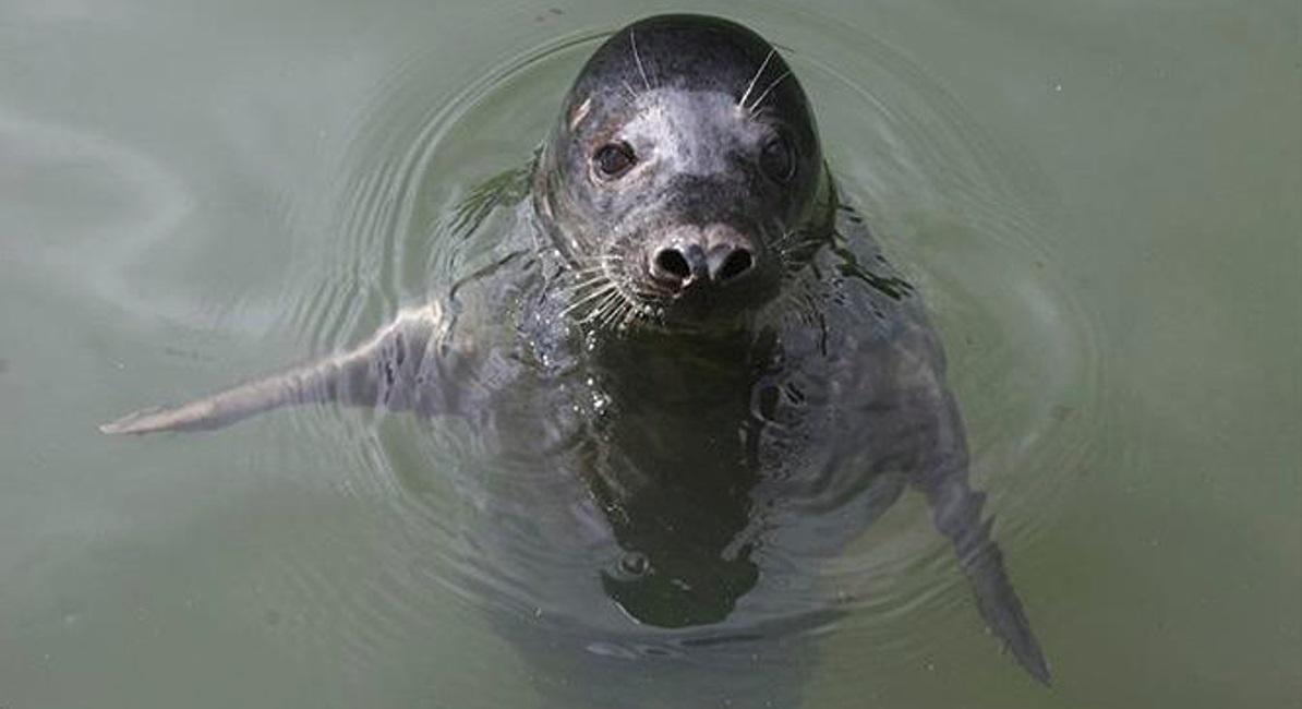"""Тюленей научили петь мелодию из """"Звездных войн"""""""