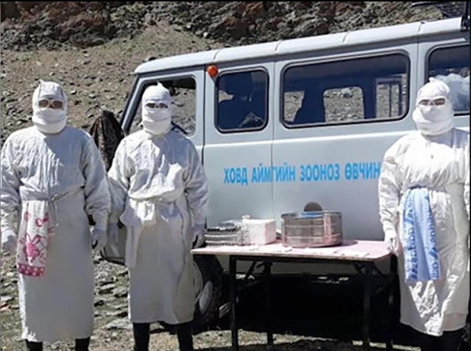 Виноваты сурки. Что известно о вспышке бубонной чумы в Китае и Монголии