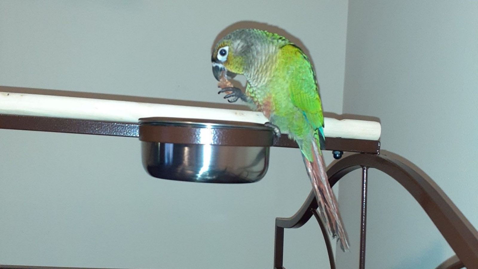 В США попугай предупредил хозяев о пожаре и спас их от гибели