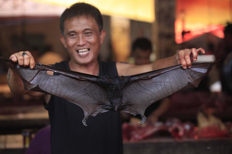 """Опасный деликатес. На """"самом страшном рынке"""" Индонезии запретили продава..."""