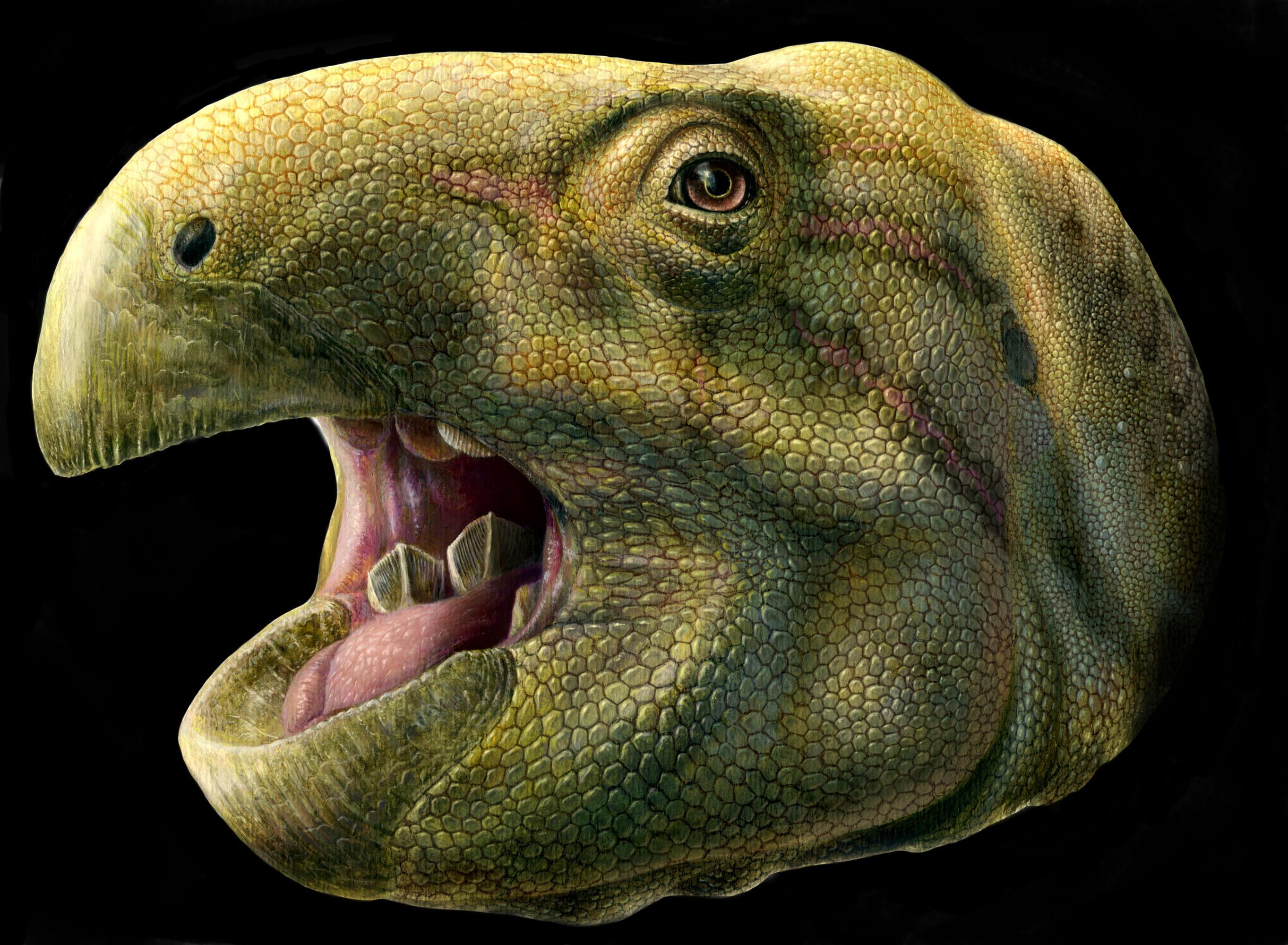 Во Франции открыли новый вид динозавров