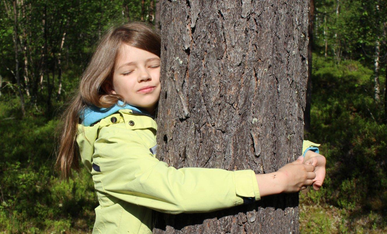 Финляндия примет первый чемпионат мира по обниманию деревьев