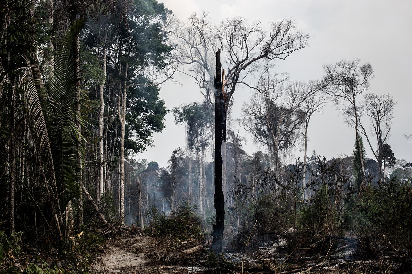 Джунгли курильщика. Почему полыхают бразильские леса и как это повлияет...