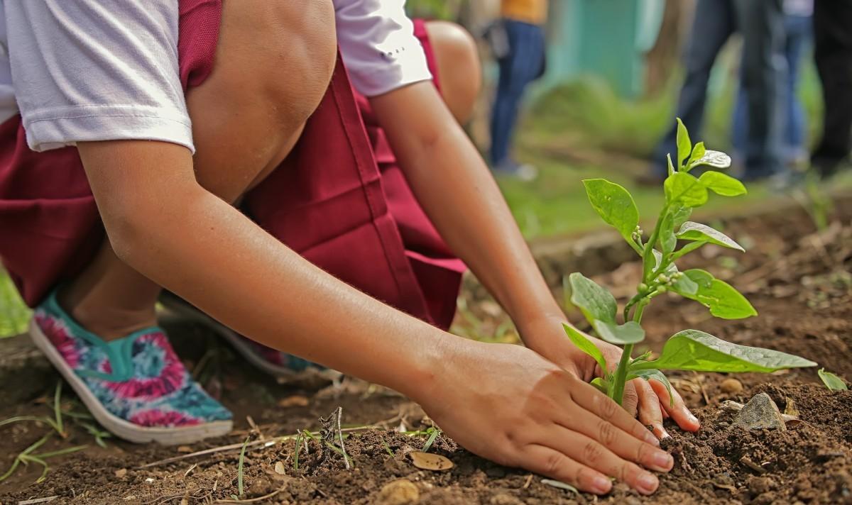 Лекарство для облесения. Зачем Эфиопии миллионы новых деревьев и как вос...