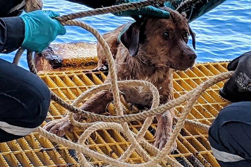 Живого пса выловили в 220 километрах от берега в Южно-Китайском море