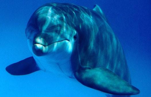 На берегу Черного моря нашли мертвых дельфинов