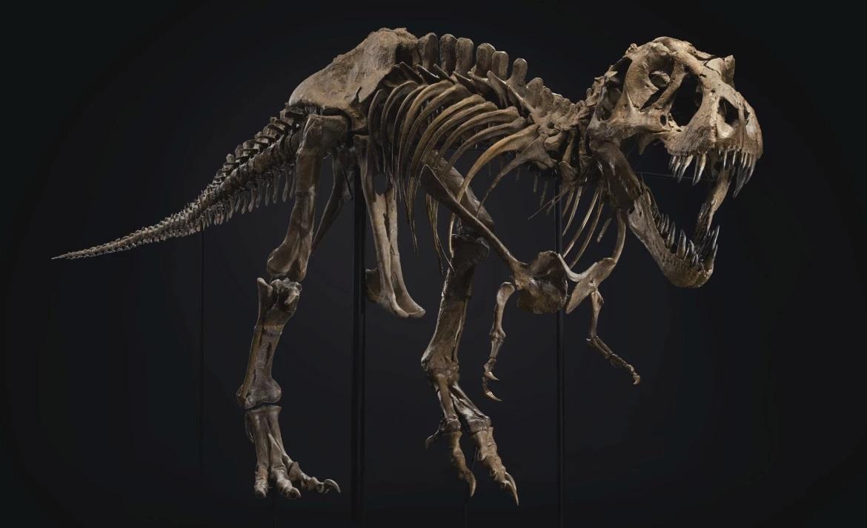 Четырехметровый тираннозавр по кличке Стэн стал самой дорогой окаменелос...