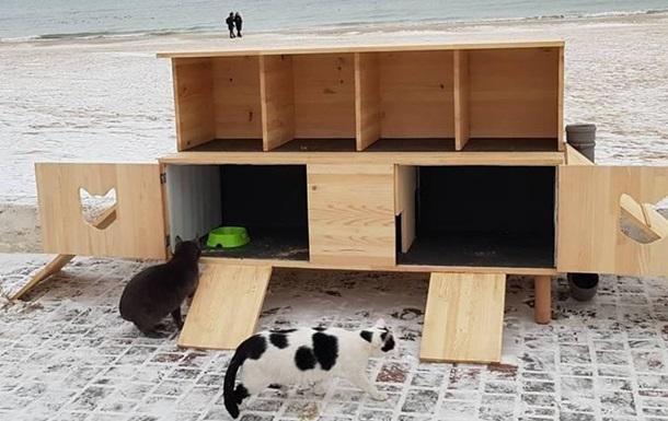 В Одессе на пляже установили домик для котов, где их согреют и накормят