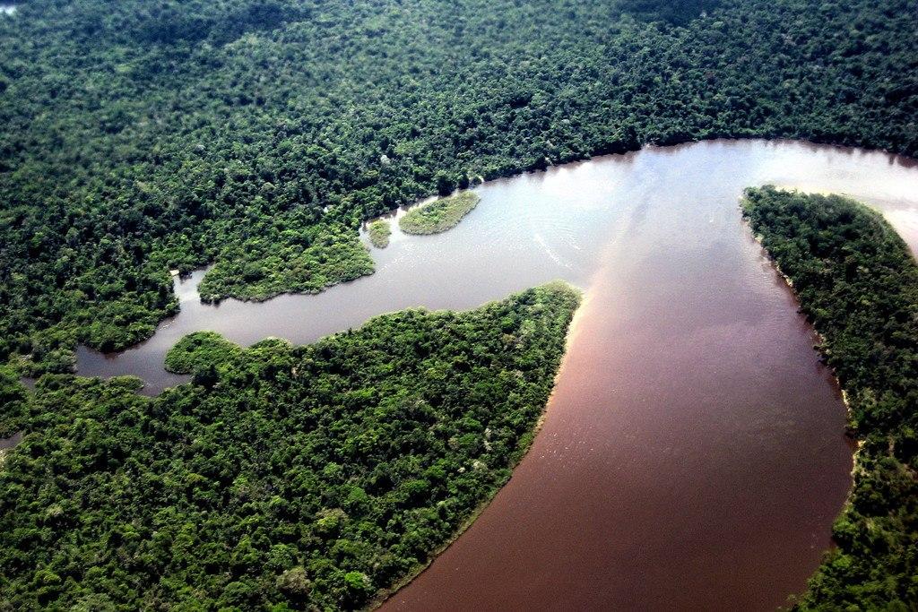 NASA показало, как уменьшилась площадь лесов в Перу за 5 лет