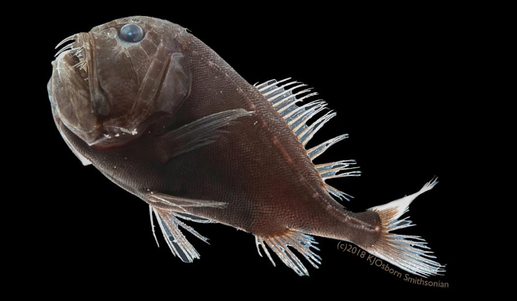 """На дне океана были найдены рыбы """"невидимки"""""""