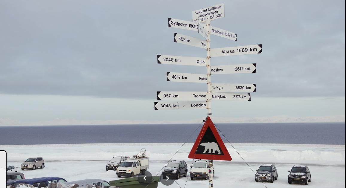 Белый медведь убил охранника, который был нанят для защиты туристов от д...
