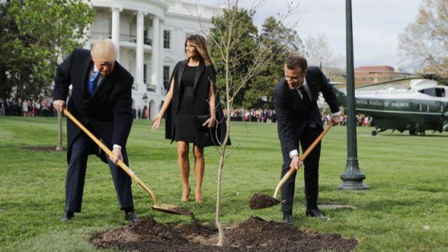 """Погибло """"дерево дружбы"""" США и Франции: Макрон пообещал подарить новое"""