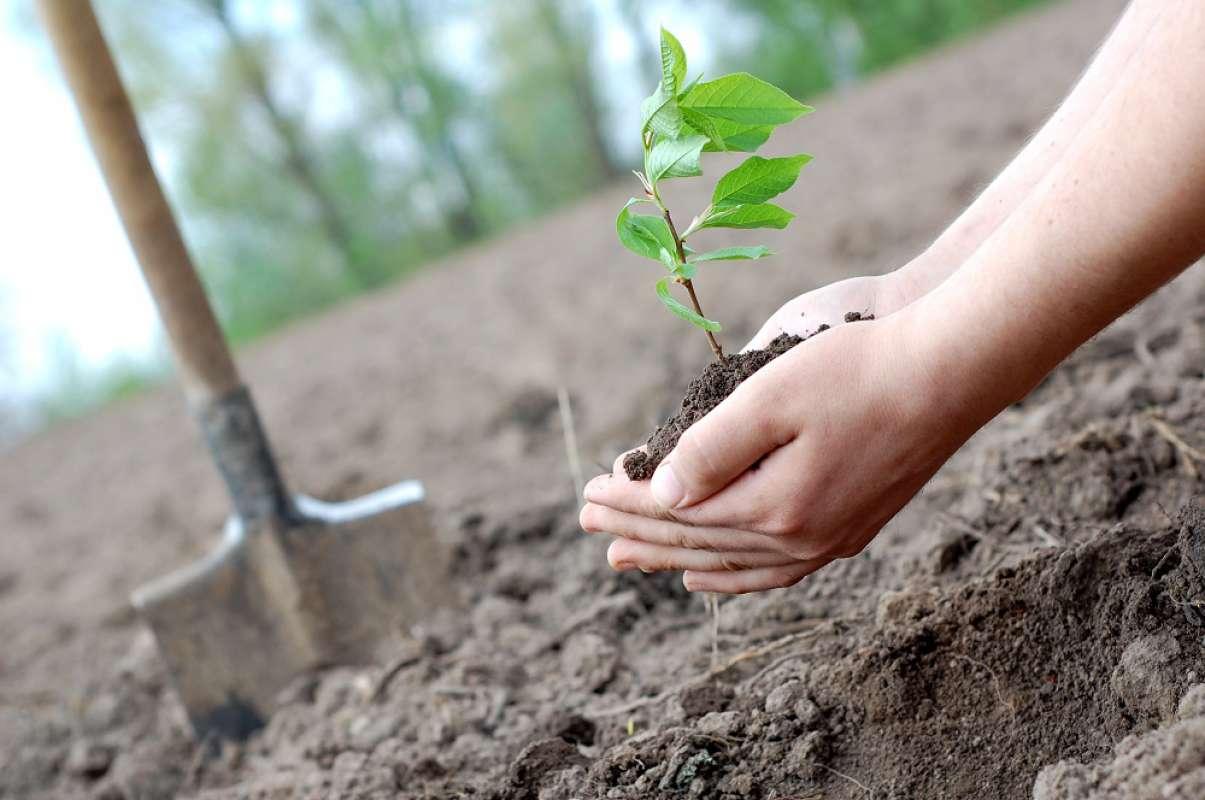 Одеревеневшая планета. Может ли массовое восстановление лесов остановить...