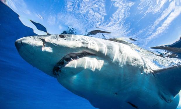 На семью украинцев в Египте напала акула 12-летний мальчик потерял руку
