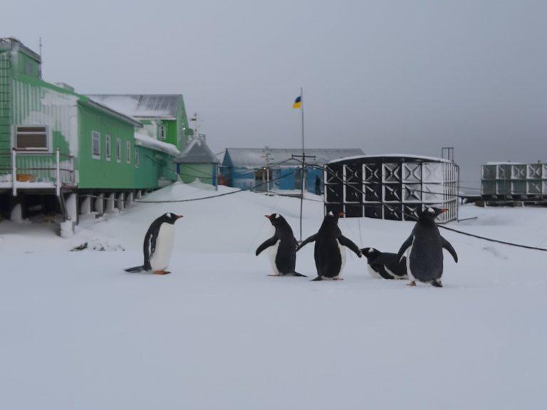 """На станцию """"Академик Вернадский"""" в Антарктиде в разгар зимы вернулись пи..."""