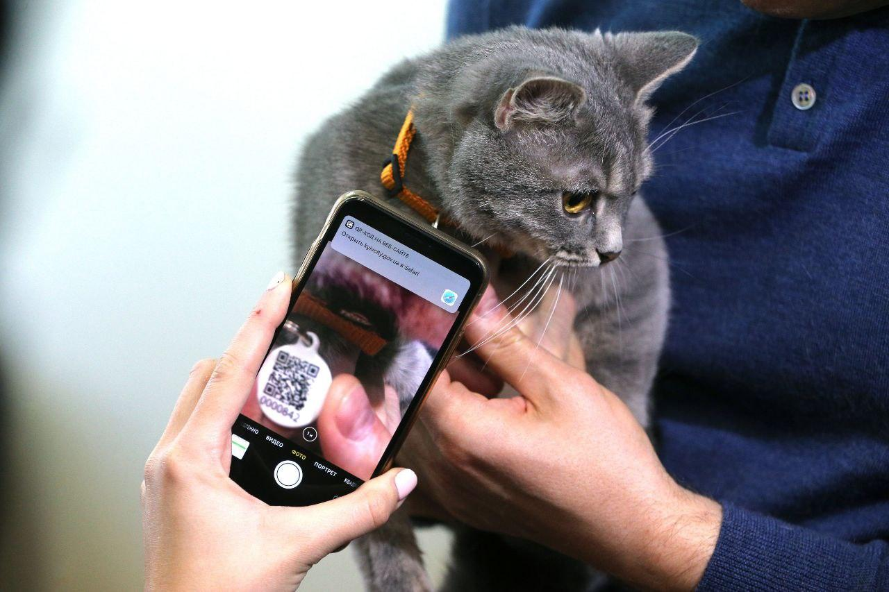 Похвостный налог. Что изменит закон об обязательной регистрации животных...