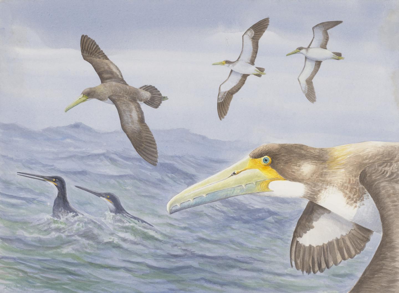 """В Новой Зеландии нашли скелет древней """"зубастой"""" птицы"""