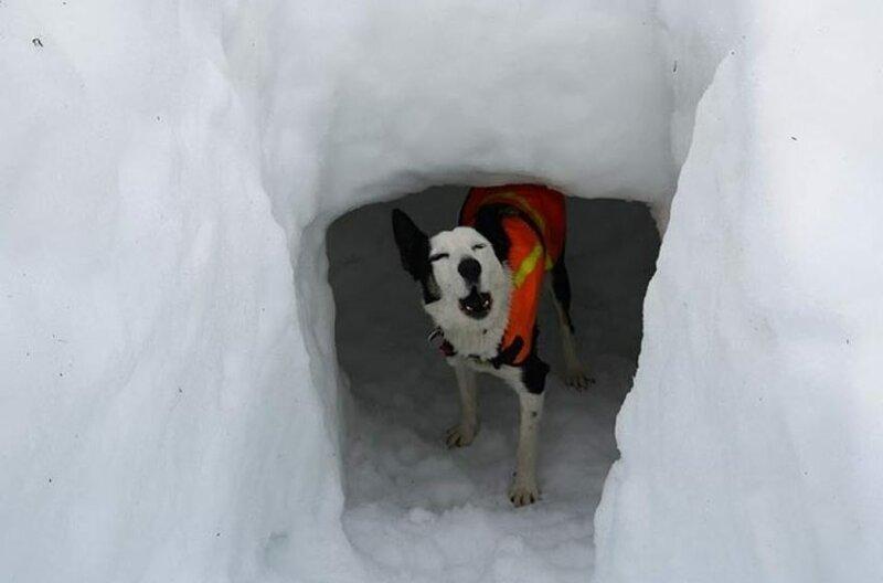 Британцы показали, как псы-спасатели вытягивают людей из под снега