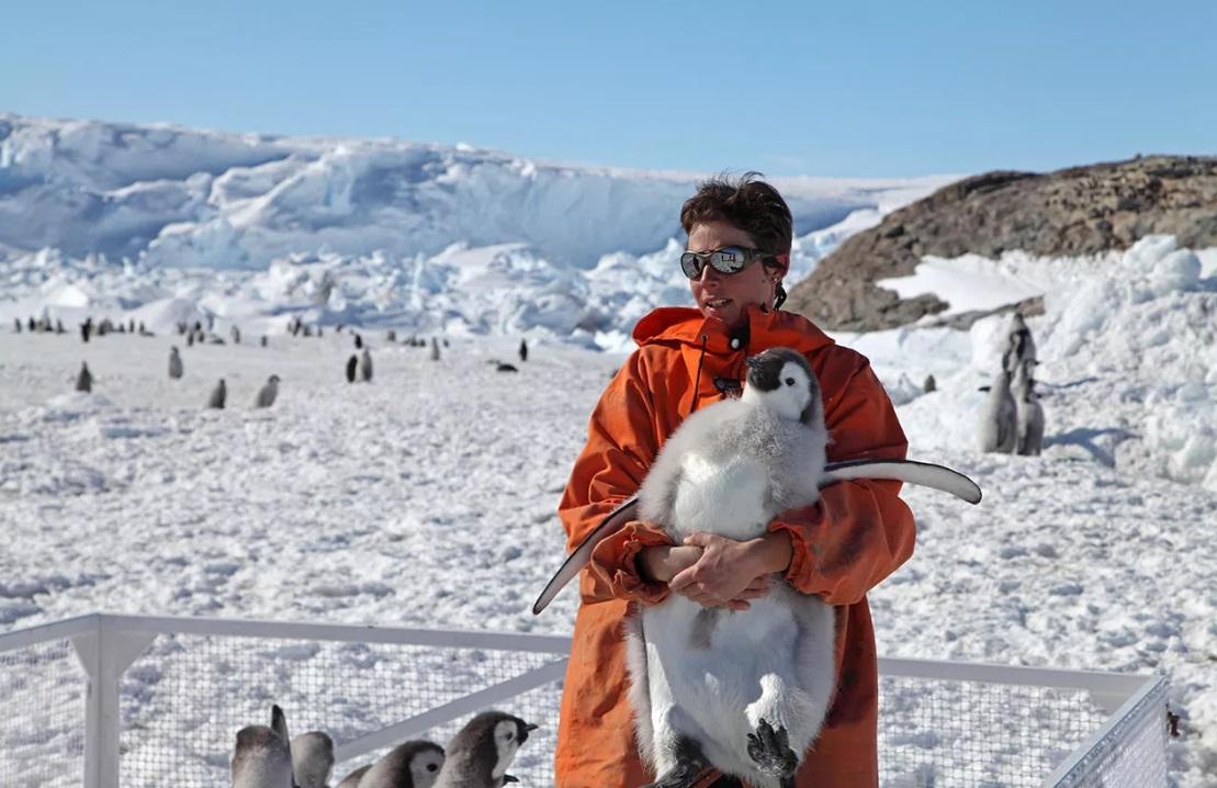 Люди с пингвинами фото