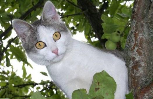Гриппом  А/H1N1 впервые заболел кот