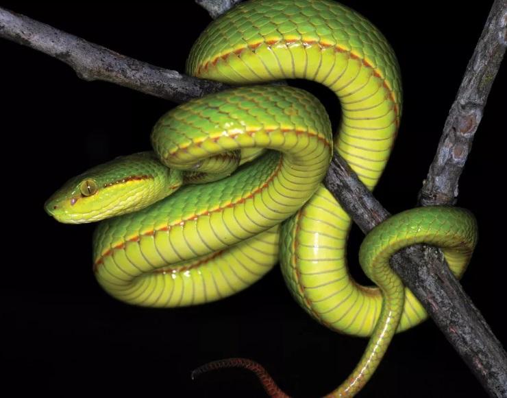 Прямиком из Хогвартса. Новый вид змей назвали в честь персонажа из Гарри...