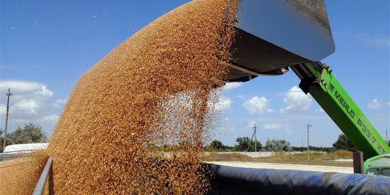 Украина стала основным поставщиком пшеницы в страны ЕС