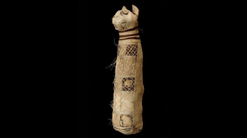 Три хвоста и пять лап: ученые просканировали древнеегипетскую мумию кота...