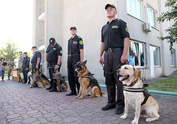 В МВД хотят научить собак определять коронавирус