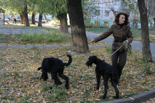 В парках Киева обустроят зоны для выгула собак