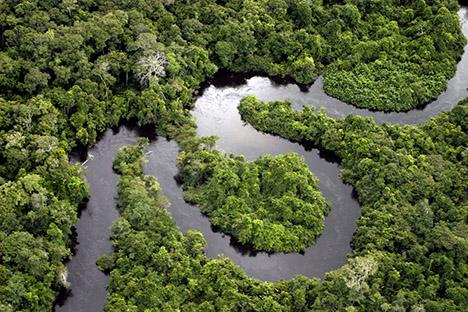 Амазонские леса стали меньше уничтожать