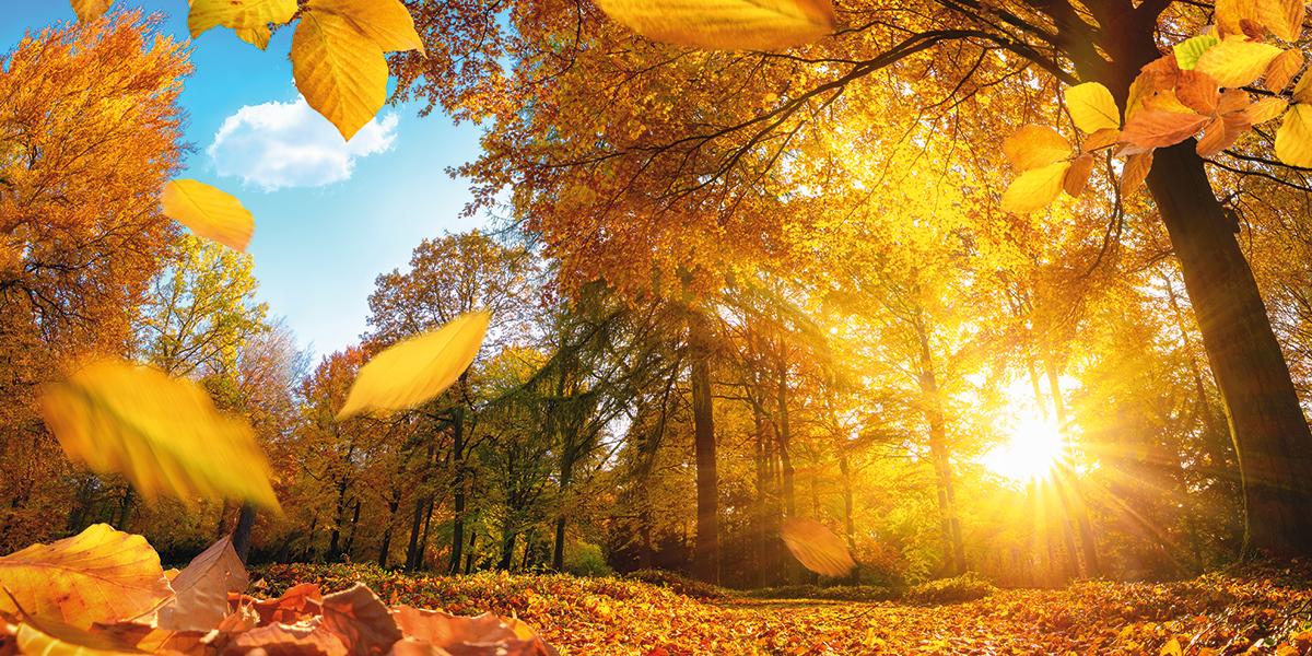 """Физика и лирика. Лучшие в Украине места для селфи в стиле """"золотая осень..."""