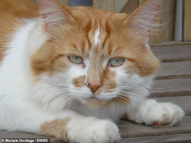 В Британии умер самый старый кот: Щебень прожил почти 32 года