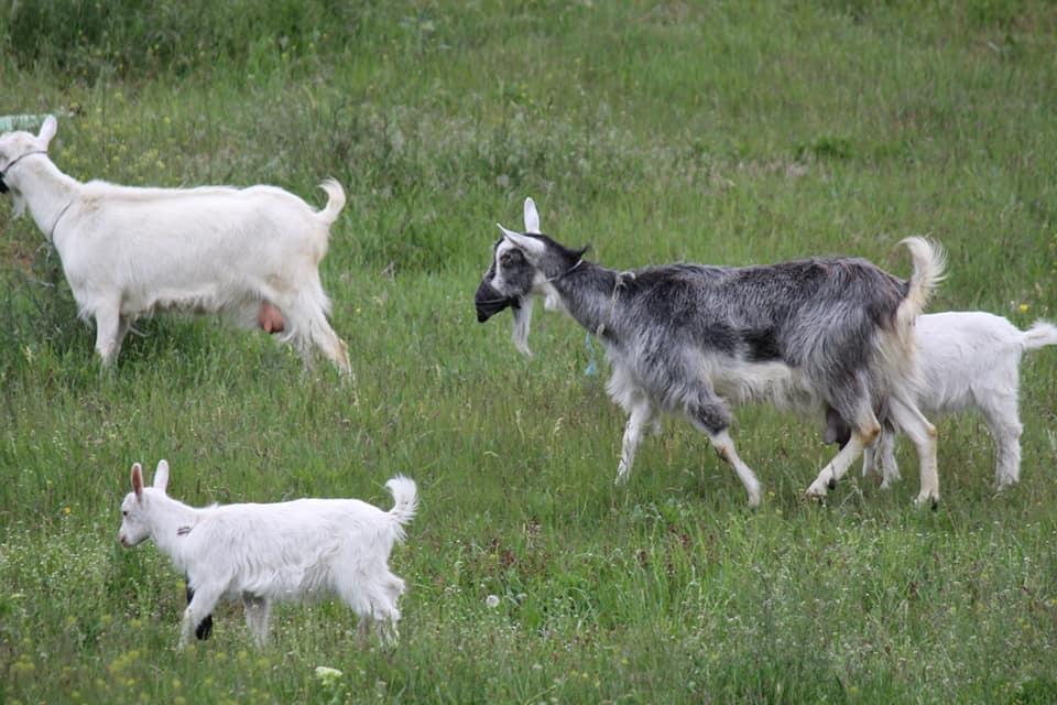 Маски, козы, Днепр