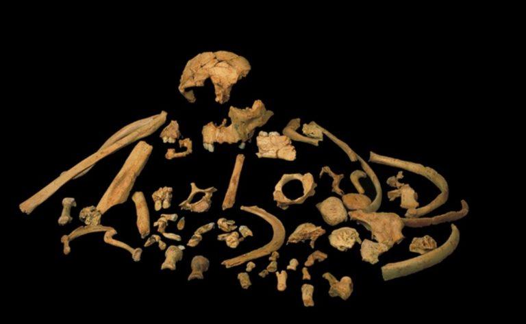 Ископаемая стоматология. Ученые получили древнейший генетический материа...