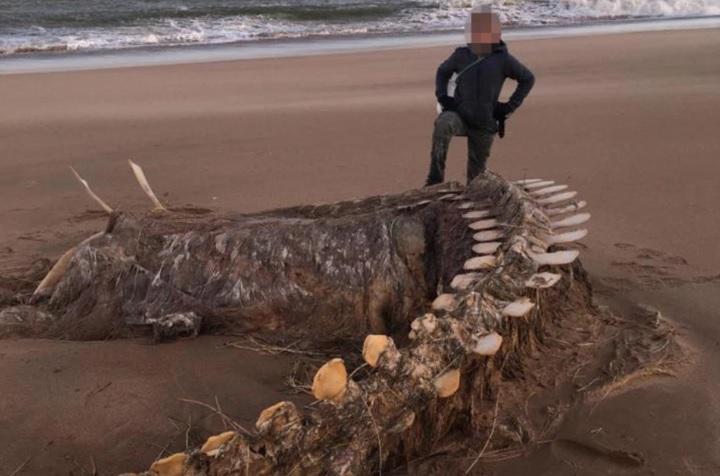 """Лох-несское чудовище. Шторм """"Кьяра"""" выбросил на берег гигантский скелет..."""