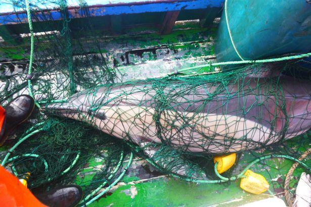 Ученые нашли действенный способ спасения дельфинов и черепах от смерти в...