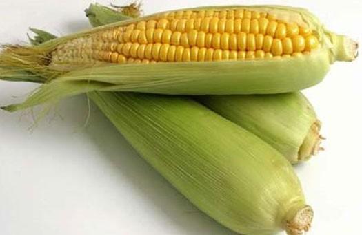 Евросоюз не разрешил импорт американской ГМ-кукурузы