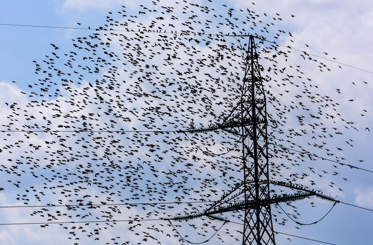 Американский городок атакуют пьяные птицы