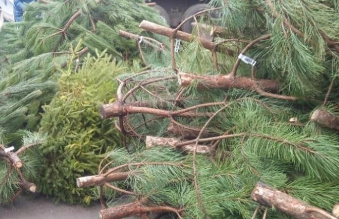 В Киеве начали работать пункты сбора новогодних елок (адреса)